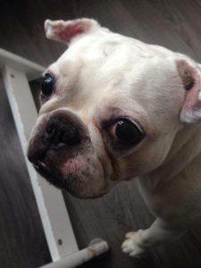 ndjoy-diva-hond-client-overleden