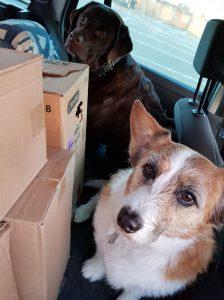 routedag-ndjoy-dankbaar-emotioneel-hulp-honden-baasjes4