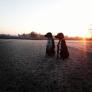 sam-herplaatsing-hond-ndjoy-hulp-honden-baasjes