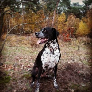 sam-herplaatsing-hond-ndjoy-hulp-honden-baasjes1