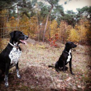 sam-herplaatsing-hond-ndjoy-hulp-honden-baasjes3