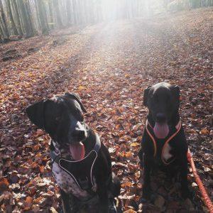 sam-herplaatsing-hond-ndjoy-hulp-honden-baasjes5