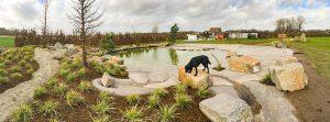 hondenwandeling-zwemfestijn-poeleke-oeffelt-ndjoy-hulp-honden-baasjes
