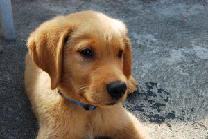 potte-hond-herplaatsing-ndjoy-hulp-honden-baasjes