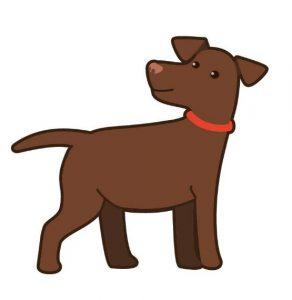 ndjoy-nieuwe-logo5-hulp-honden-baasjes-cuijk-boxmeer