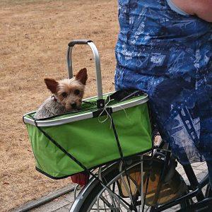 binky-herplaatsing-yorkshire-terrier-hond-ndjoy-hulp-honden-baasjes (4)