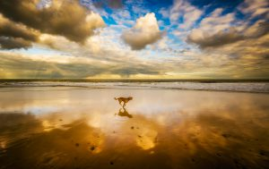 beach-dog-evening-1509237-op-zoek-hond-ndjoy-hondenhulp